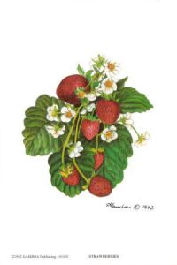 freshfromthevine-strawberry